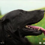 Animal communication – Understanding how animals think and feel